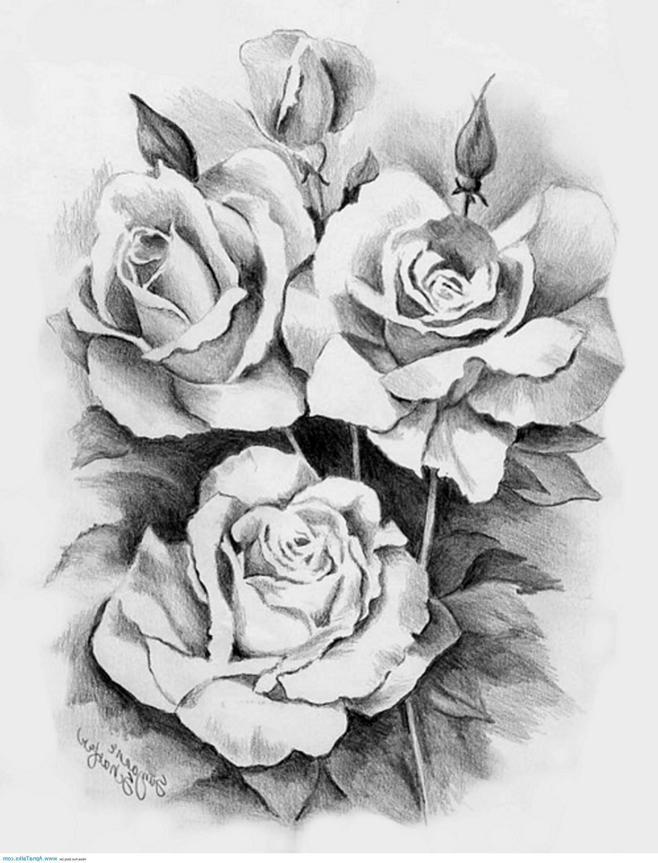 Rose Tattoo Designs Google Search Pencil Drawings Of Flowers Roses Drawing Rose Drawing Tattoo