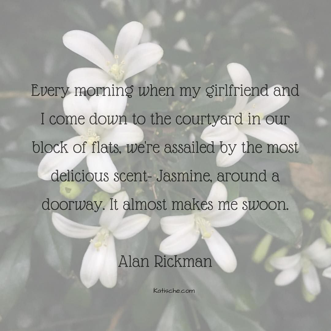 Cant you just imagine a young alan rickman saying this these cant you just imagine a young alan rickman saying this these are the jasmine flowers outside my bedroom window i wonder if the izmirmasajfo