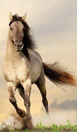 sorria pony.