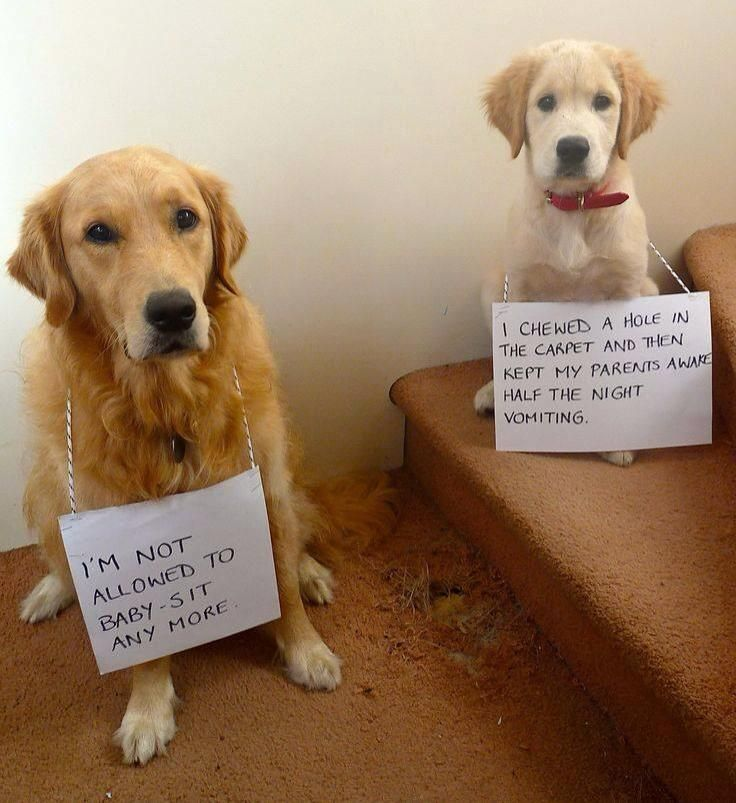 Too Too Funny Dog Shaming Dogs Funny Dogs
