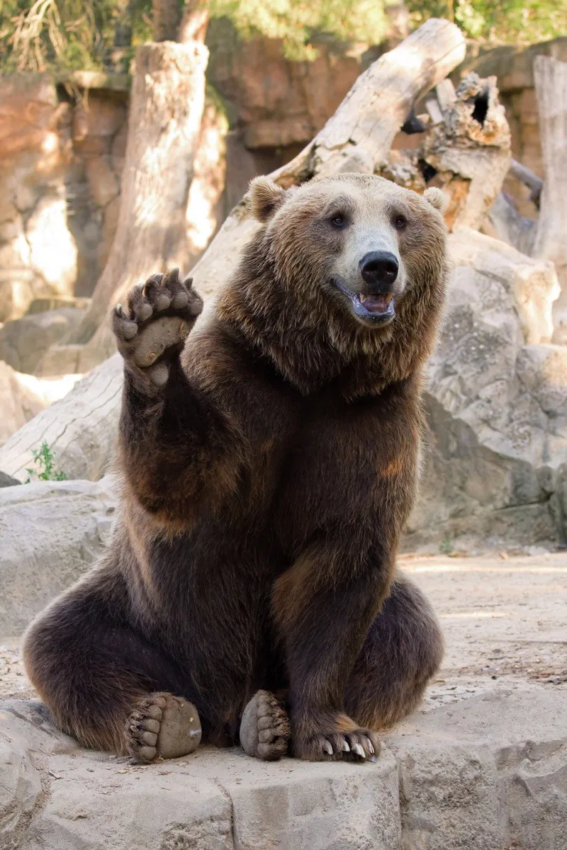 18 Adorable Photos of Bears Being Basically Like Big Puppies | Best Life