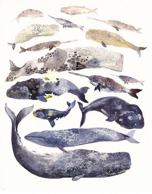 fuckyeahmobydick:  Stacked Whales by Michelle Morin