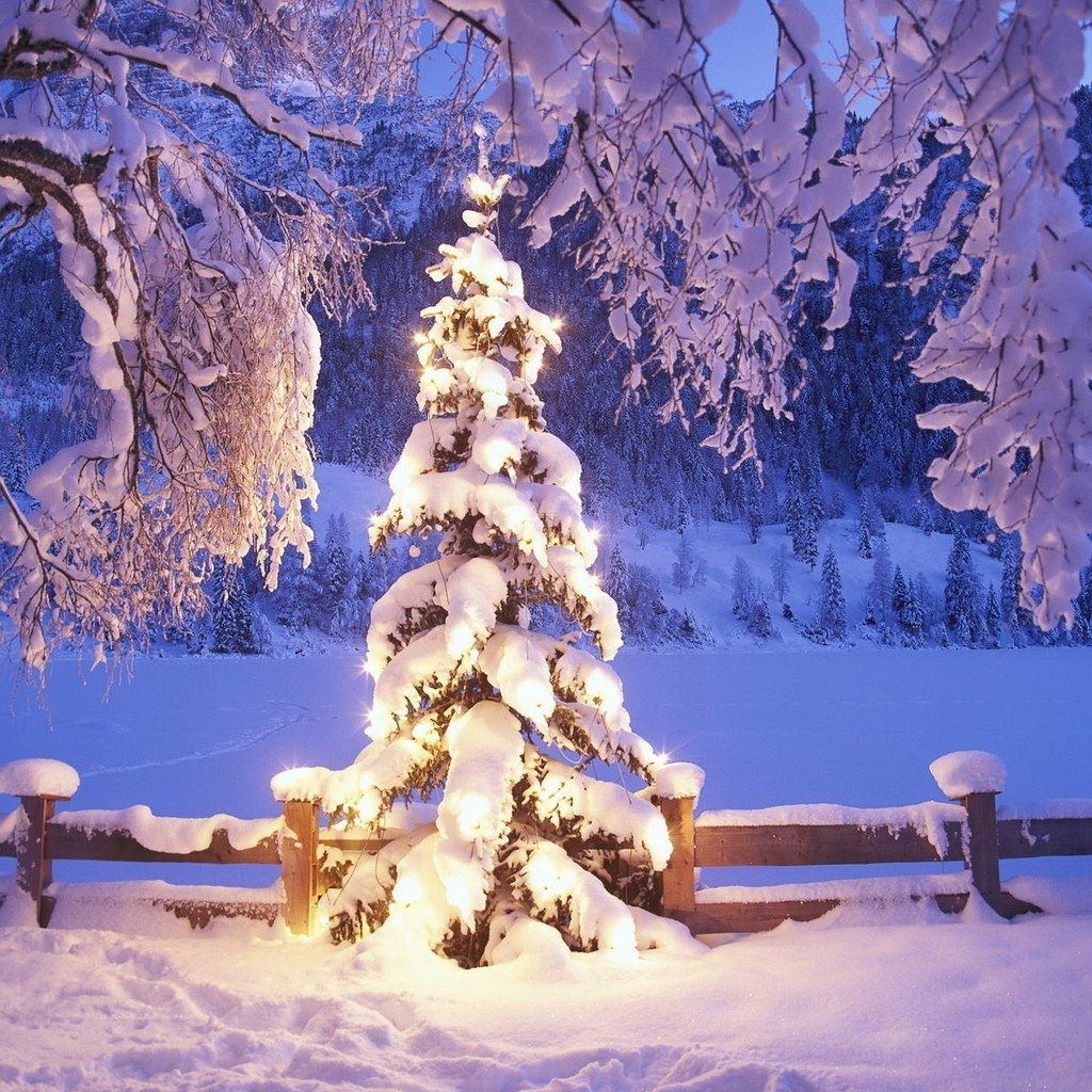 Fantastic Christmas Trees IPad Mini Wallpapers 1024x1024 04