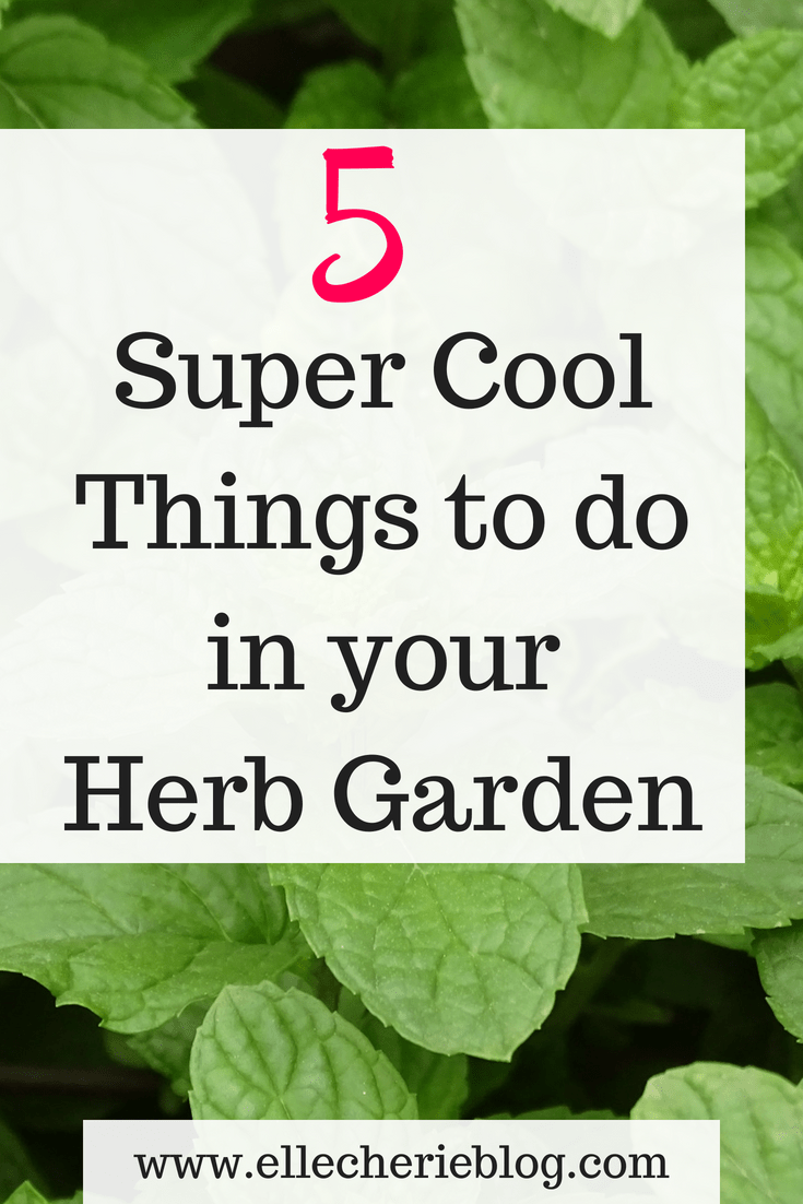 5 Things I did to spruce up my Herb Garden is part of Herb garden, Herbs, Country garden decor, Fun things to do, French country garden, Country gardening - Want to know how to put in a herb garden but just don't know where to start  Read on to find out how easy it is to put in your very own herb garden today