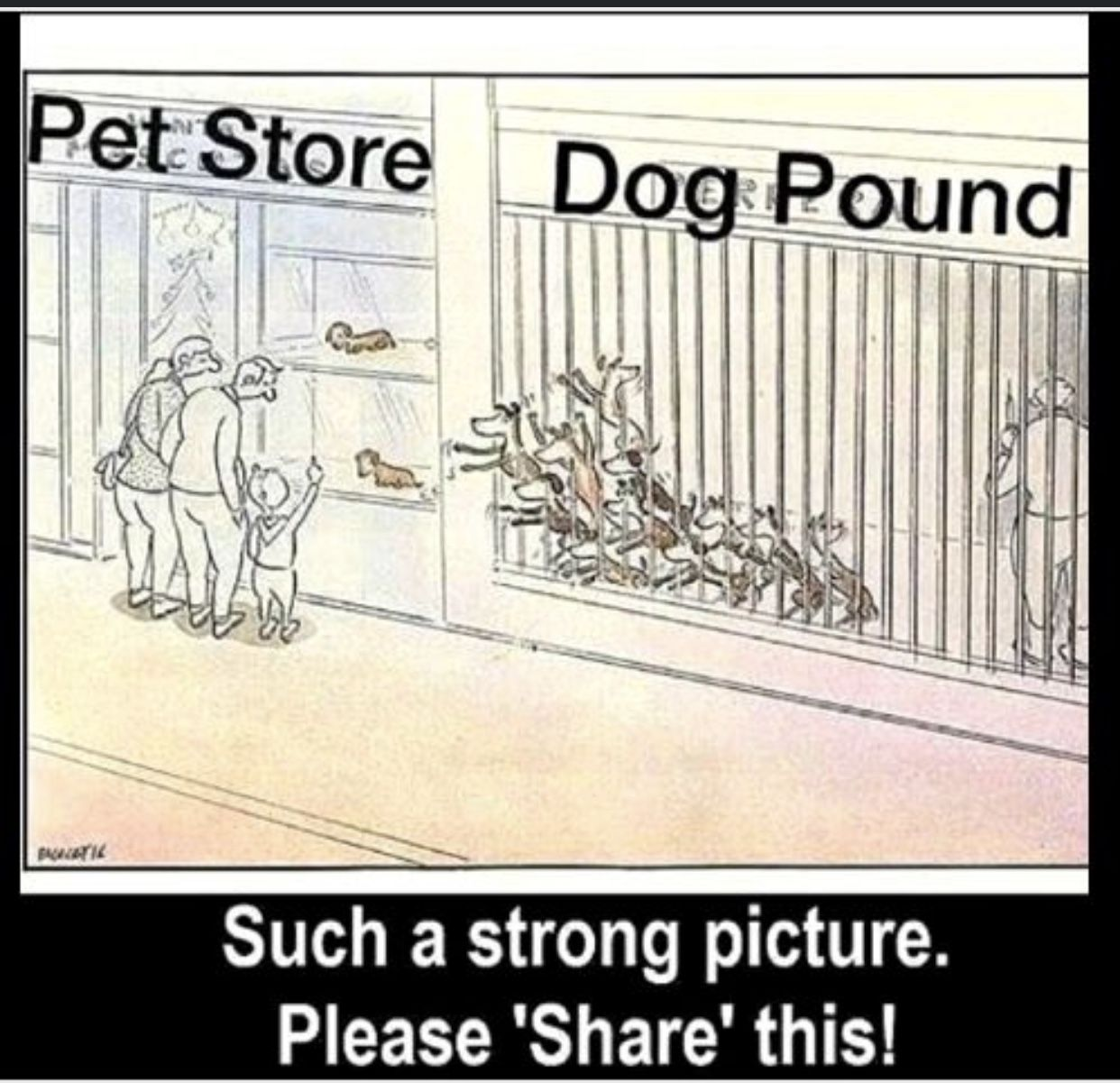 Pin by A Lana on Animals in 2020 (With images) Dog