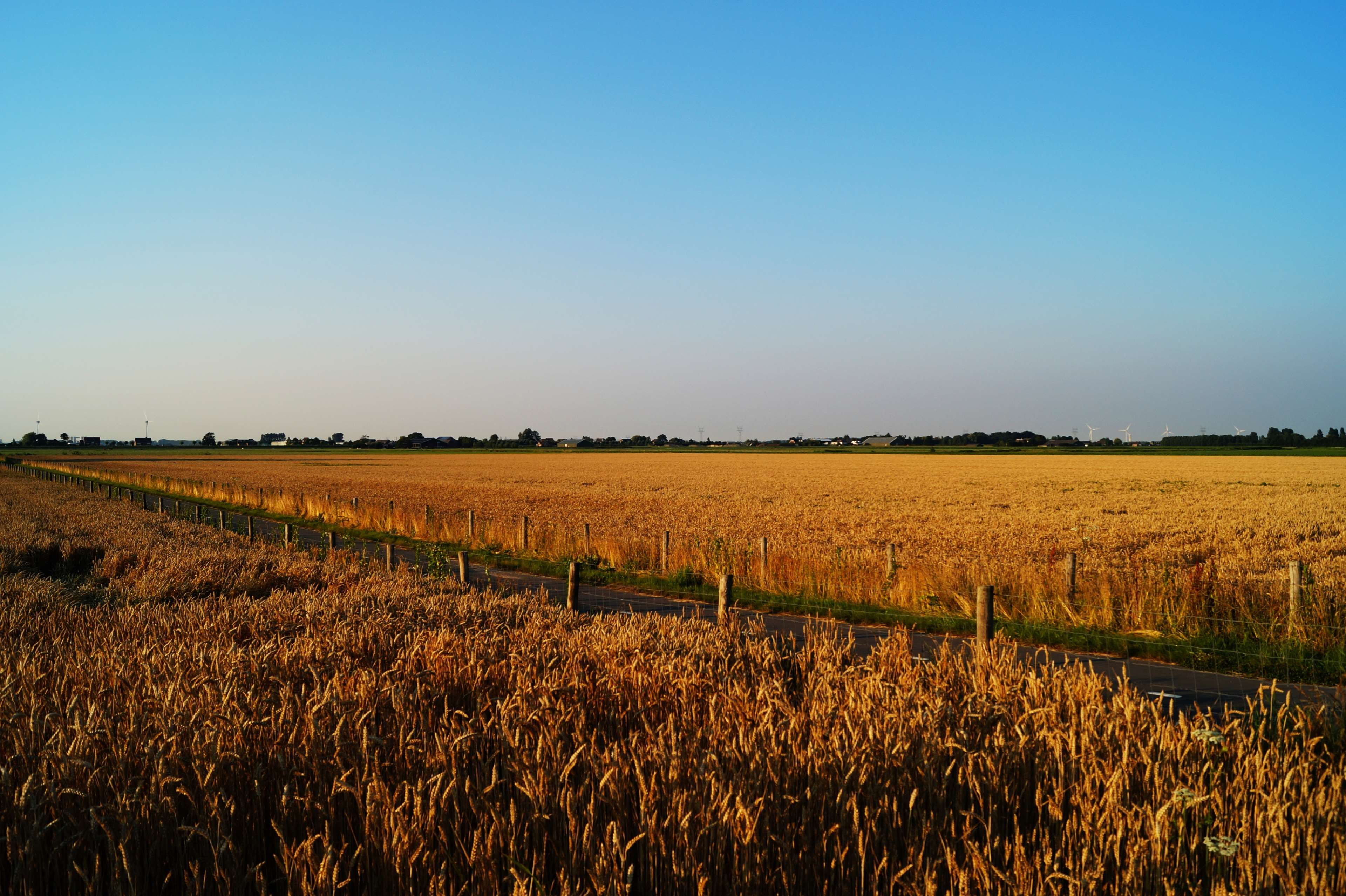 #agriculture #cereal #corn #countryside #crop #cropland #fall #farm #farming #farmland #field #food #grain #grow #growth #harvest #landscape #nature #outdoors #pasture #road #rural #sky #summer #wheat #wheat field
