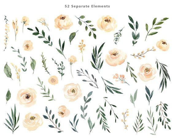 Watercolor Floral Clipart Beige Cream Light Creamy Flowers Roses