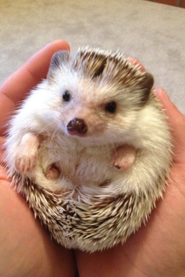 Pin on Adorable Baby Animals