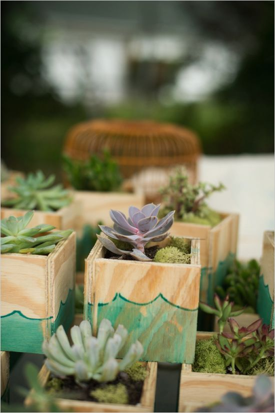 cute diy succulent wedding favors #underwaterthemewedding #bluewedding  #weddingchicks http://www.weddingchicks.com/2014/01/03/fish-and-bird- backyard-wedding ... - Fish And Bird Backyard Wedding Pinterest Favors, Backyard And Fish
