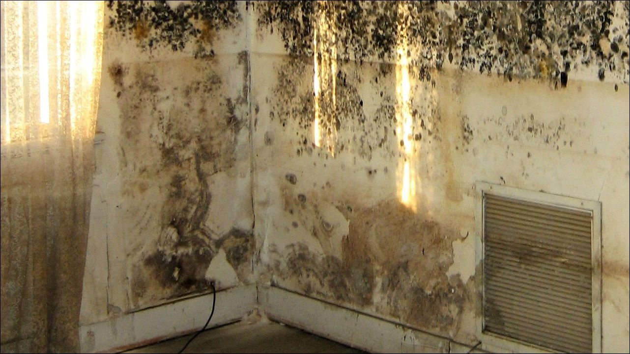 How do you get rid of mold in the basement get rid of