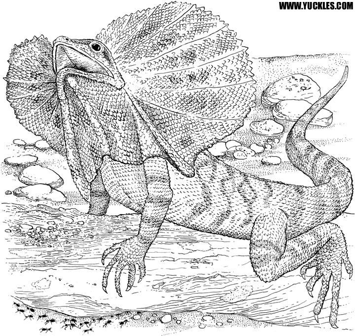 lizard coloring page you can print