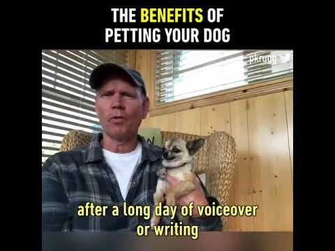 petting your dog is relaxing