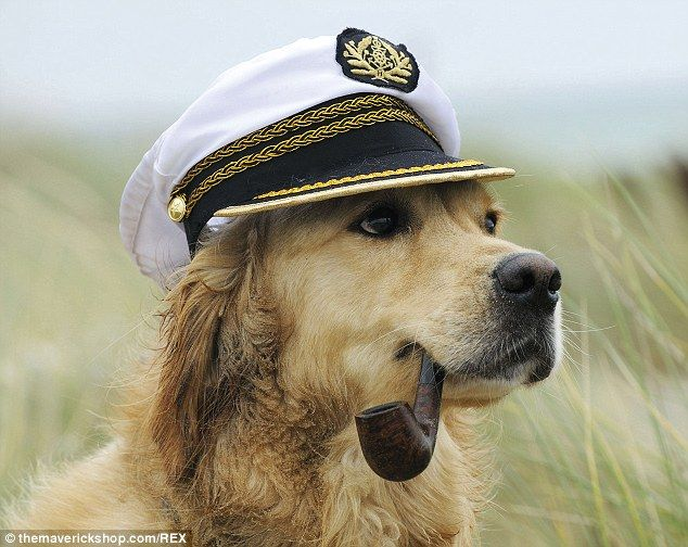 Wearing A Captain S Hat R Dogswearinghats Dog With Hat Animals Friends Sea Dog