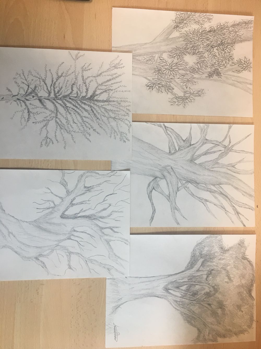# variety of trees