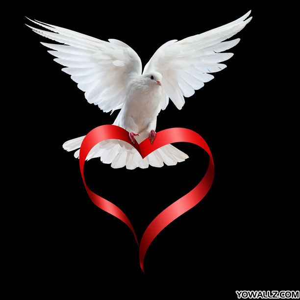 White Dove And Loving Heart All Symbolize The Feminine Aspect Of God