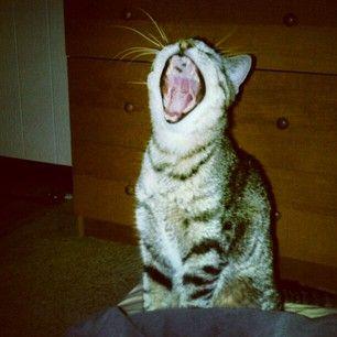 my crazy cat