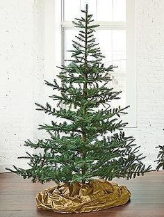 Sparse Christmas Tree Types Google Search Holidays