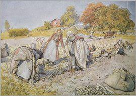 Carl Larsson - Kartoffeln ausgraben