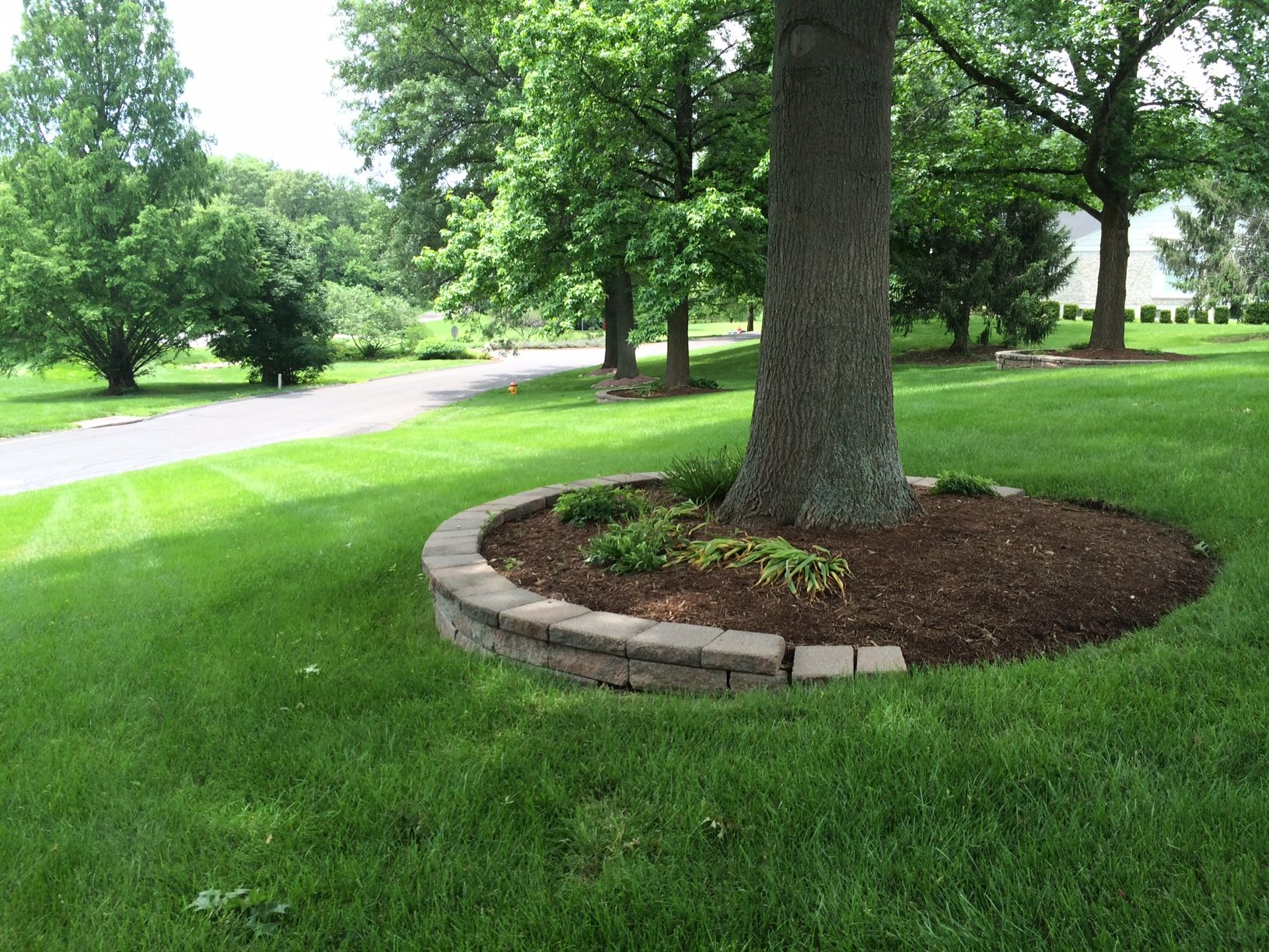 mulching around tree ringsfor our front yard tree home and garden - Flower Garden Ideas Around Tree
