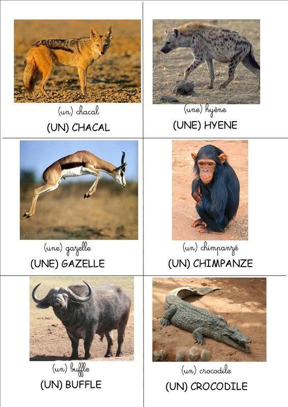 Loto Des Animaux D Afrique La Classe De Mamaicress Animaux Afrique Imagier Animaux Animaux