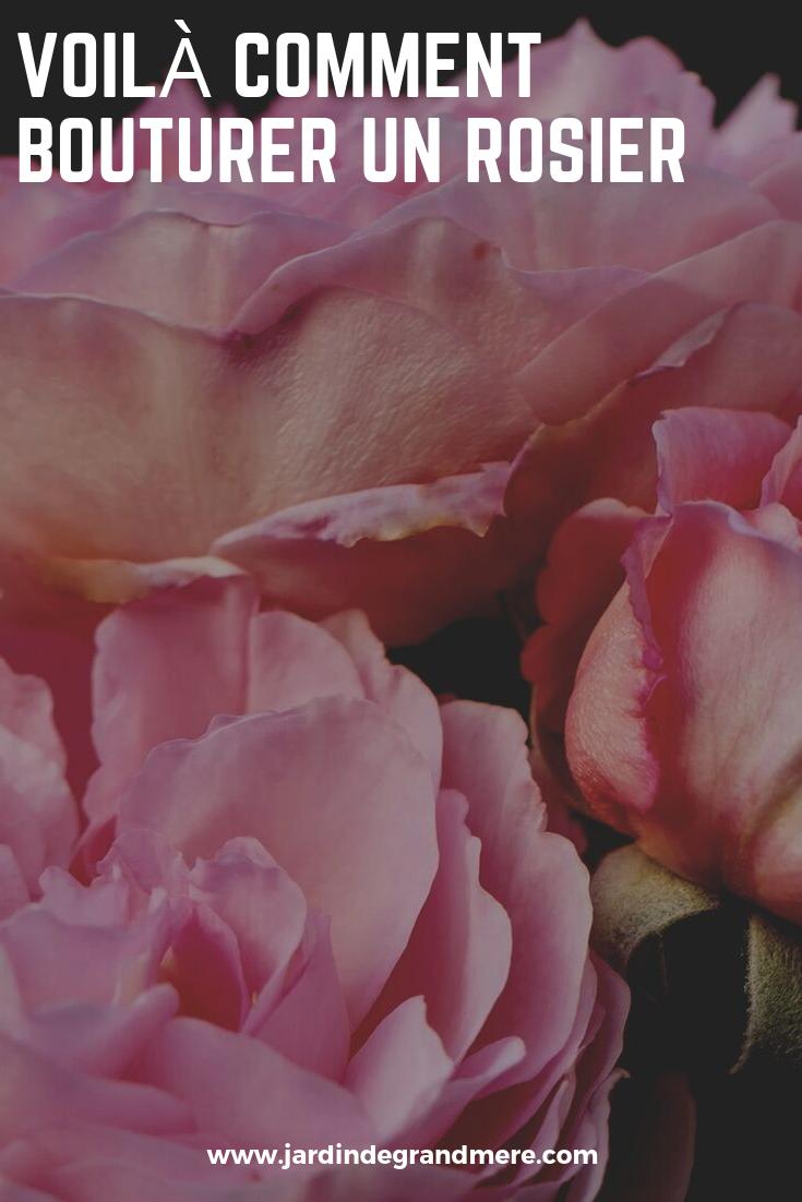 Faire Un Rosier Avec Une Rose Épinglé par micheline vallerand sur entretien plantes de