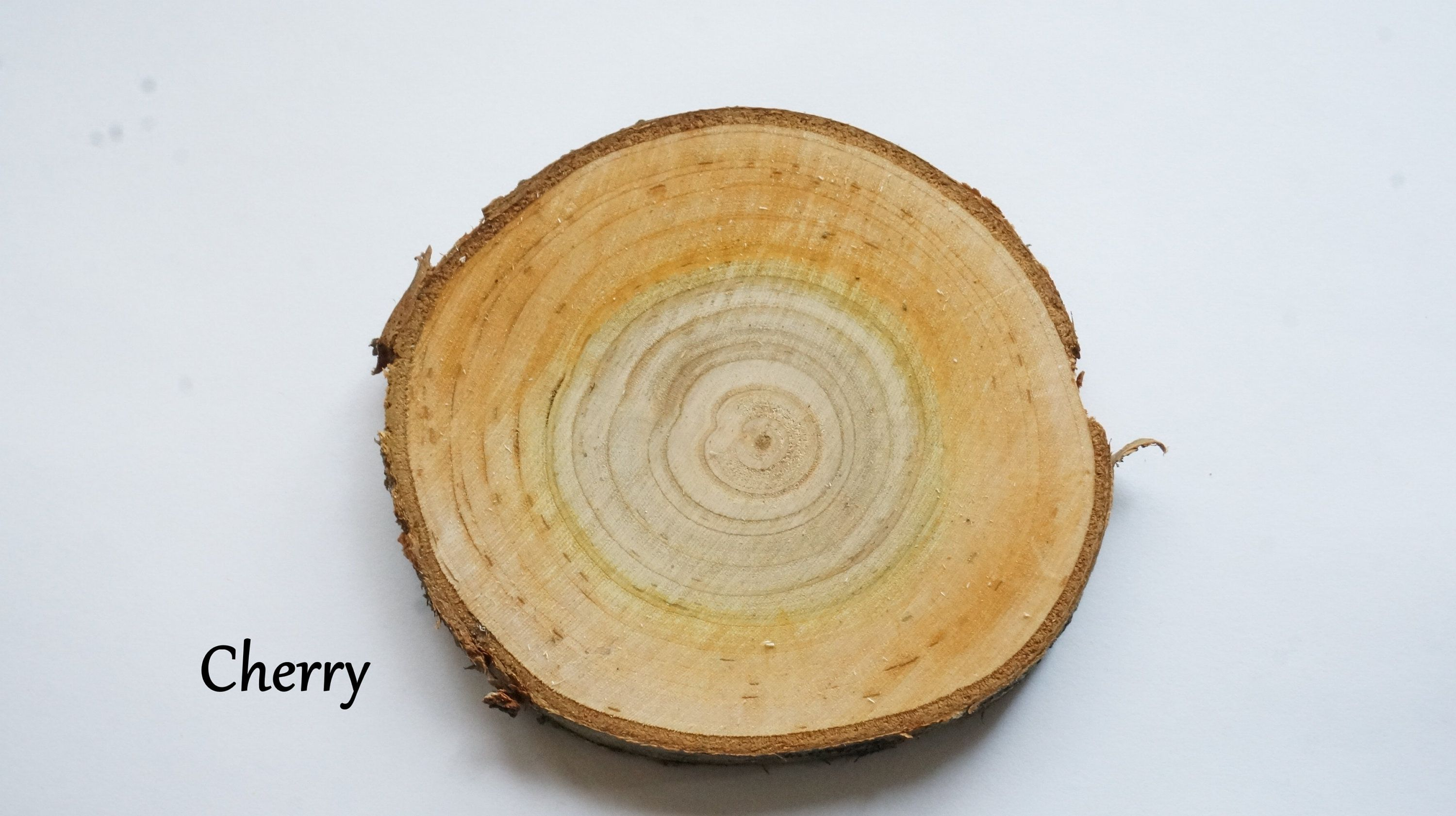 Made To Order 10 Cherry 3 4 In Wood Slices Blank Wooden Wedding Favors Bulk Tree Slab Ornaments Log Discs Py Tree Slab Wood Slices Wooden Wedding