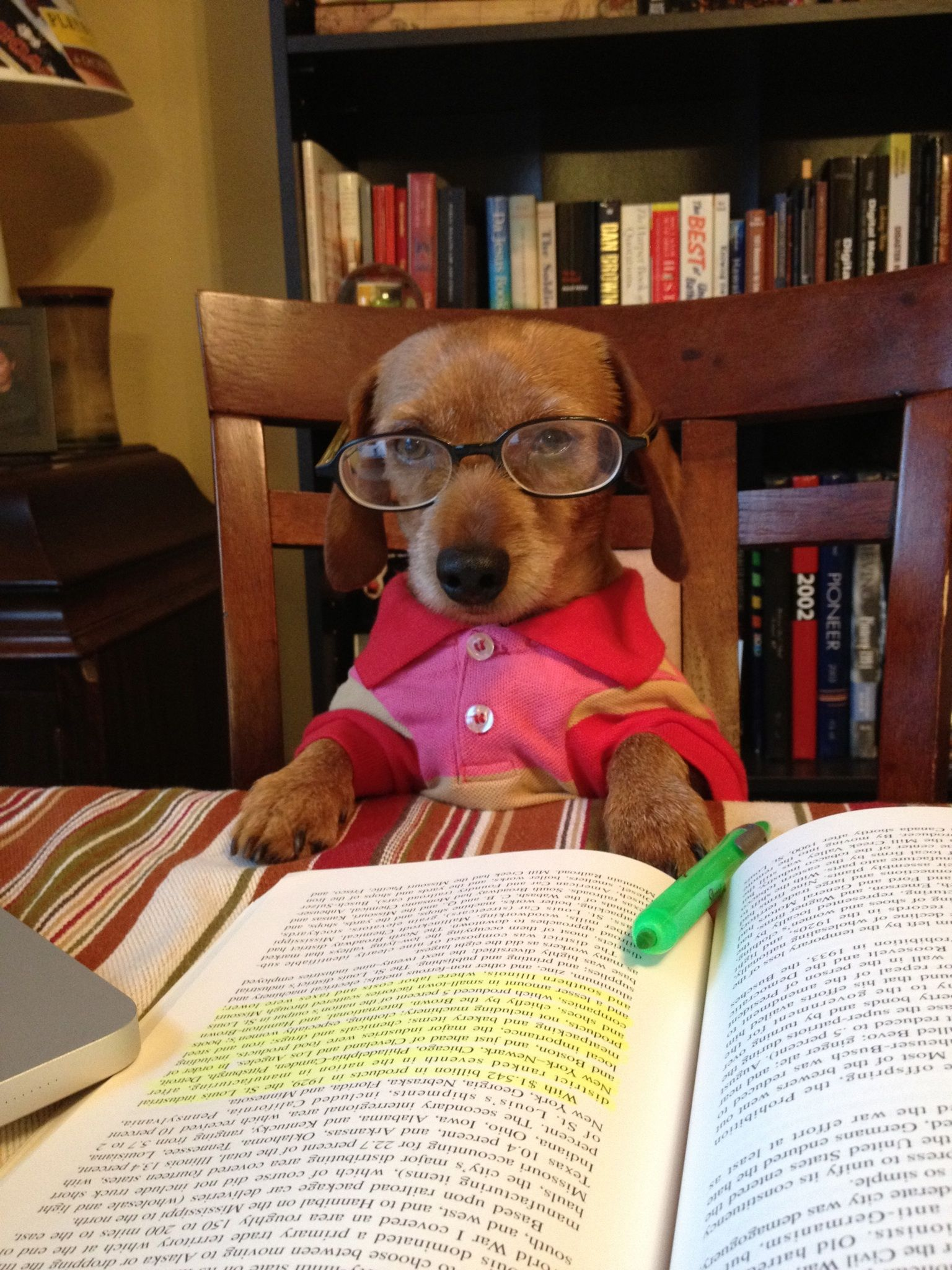 writing his memoirs. Dogs, Pets, Cute animals