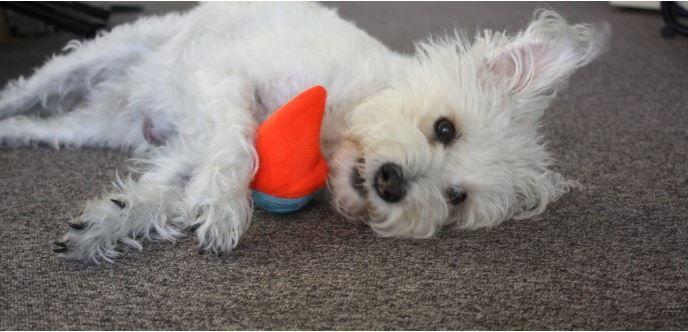 Was Bringen Spiele Fur Den Hund Ein Interessanter Beitrag Im Neuen Blog Von Dog S Finest Http Blog Dogsfinest De Hundebaby Hundehalsband Leder Hunde
