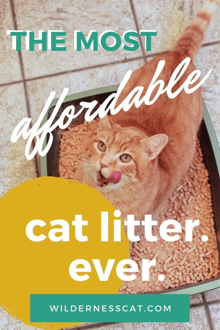 Wood Pellet Cat Litter Review We Tried Horse Bedding Cat