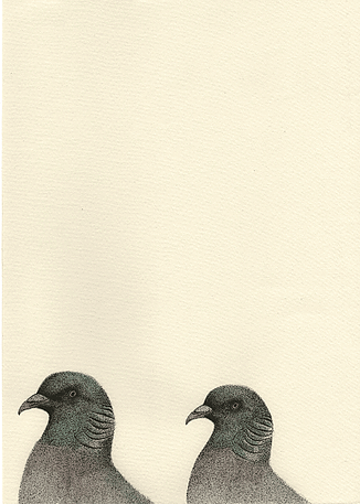 Columba palumbus (2016) Pen & Watercolour with gloss finish 210mm x 297mm by Anna Vialle Print £30.00