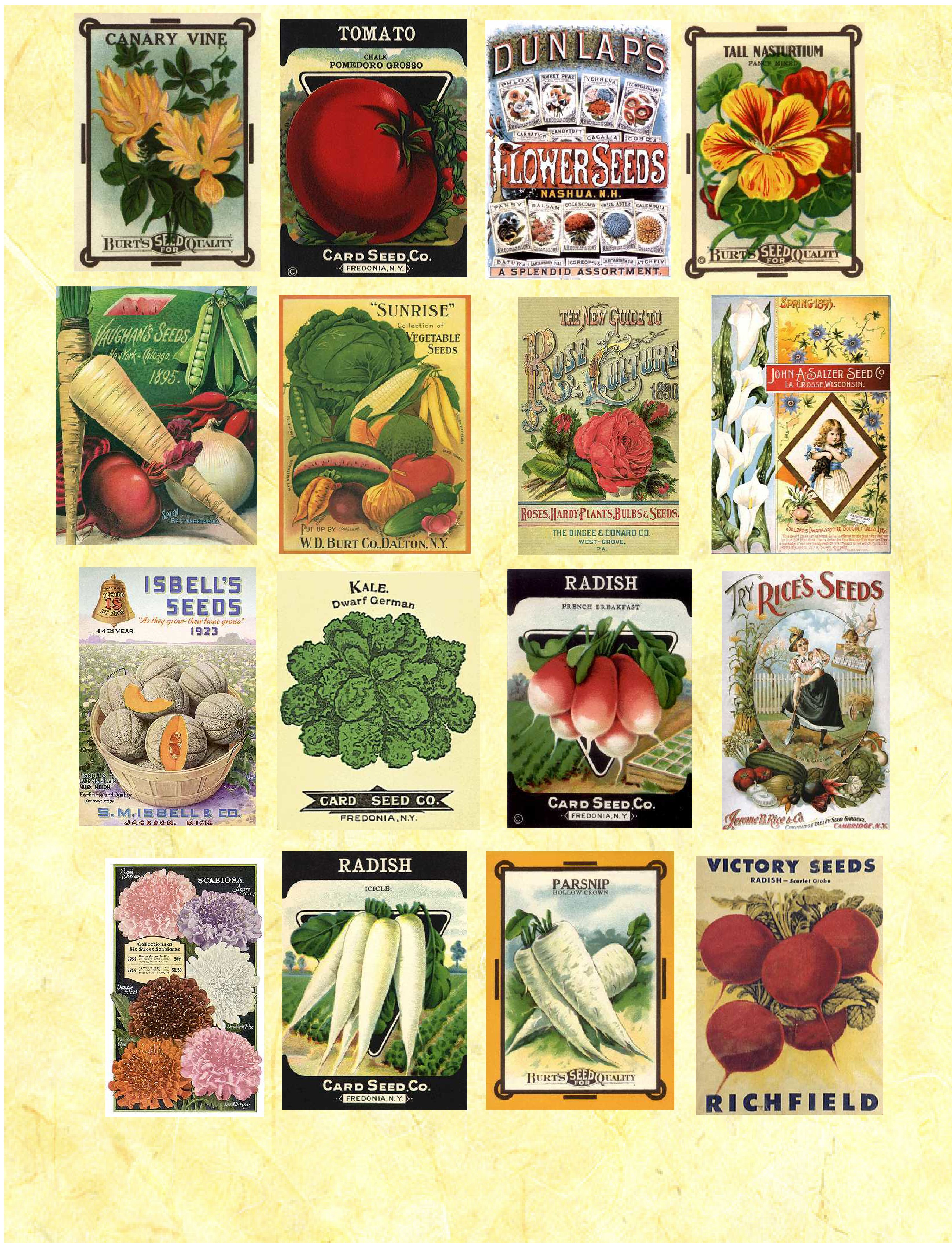 Ridiculous image throughout free printable seed packets