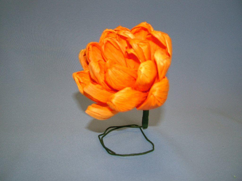 Mexican Chrysanthemum: Citrus Orange flower life size