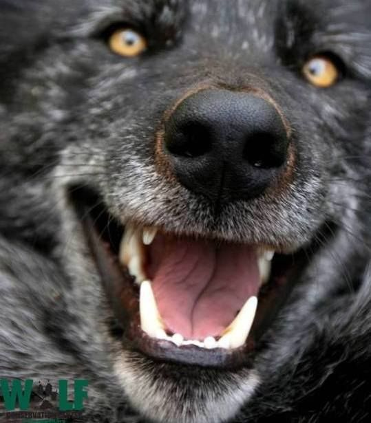 Happy Black Wolf Friday Everyone!