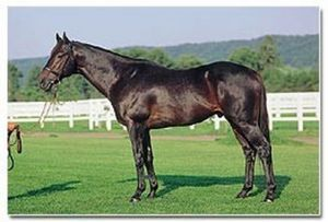 King Glorious(1986)Naevus- Glorious Natalie By Reflected Glory. 4x4 To Tom Fool, 5x5 To Nasrullah. 9 Starts 8 Wins 1 Second. $1,175,650. Won Hollywood Futurity(G1), Haskell Inv(G1), Hollywood Juvenile Chp S(G2), Ohio Derby(G2), Hollywood Prevue(G3), Kindergarten S(L-R), Piedmont S(L-R), 2nd Gold Rush H(L). Sent To Japan In 1990 For Stallion Duties.: