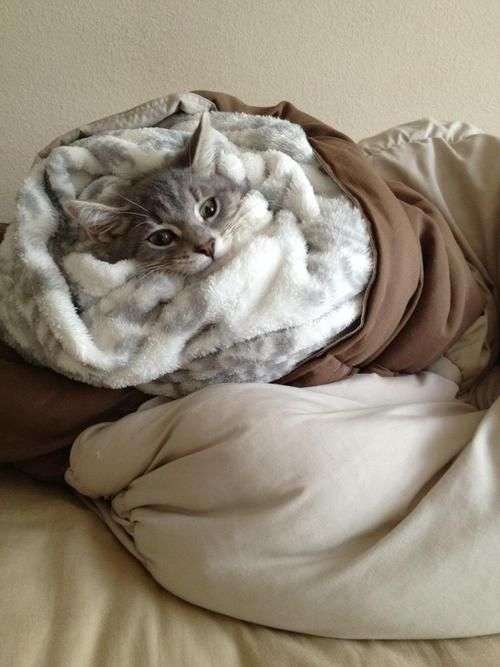 Warm And Snuggly Kitty Kitty Meow Meow Pinterest