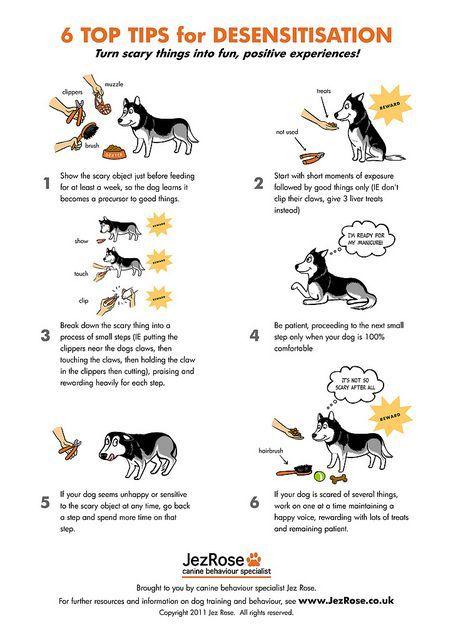 Desensitization Dog Training Puppy Classes Puppy Training