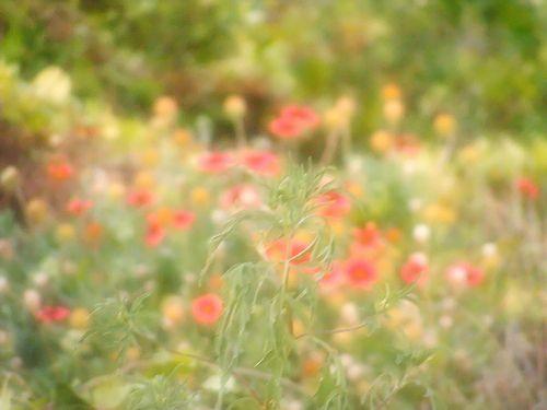 Dreamy Dune Flowers