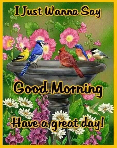 Just Wanna Say Good Morning Have A Great Day I Think A Bird Would