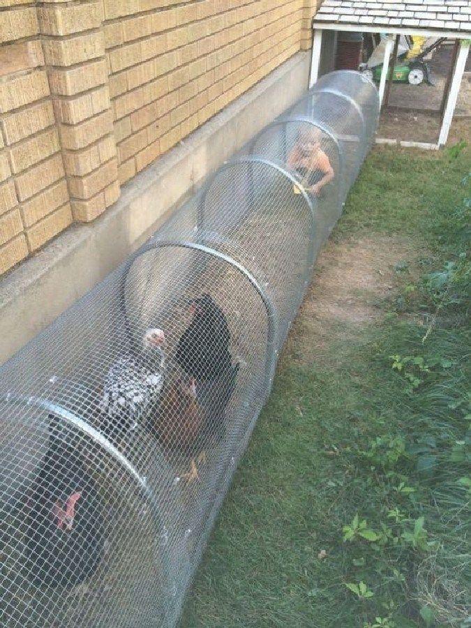 Best Creative and Easy Backyard Chicken Tunnel (24)   - DIY -