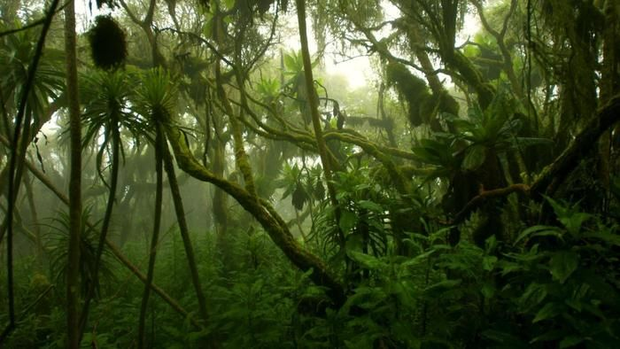 What is the climate of the Congo rainforest like? | Reference.com