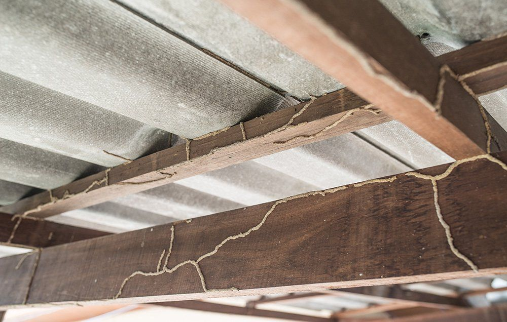 6 Signs Your House Has Termite Damage And What To Do About It Termites Termite Control Wood Termites