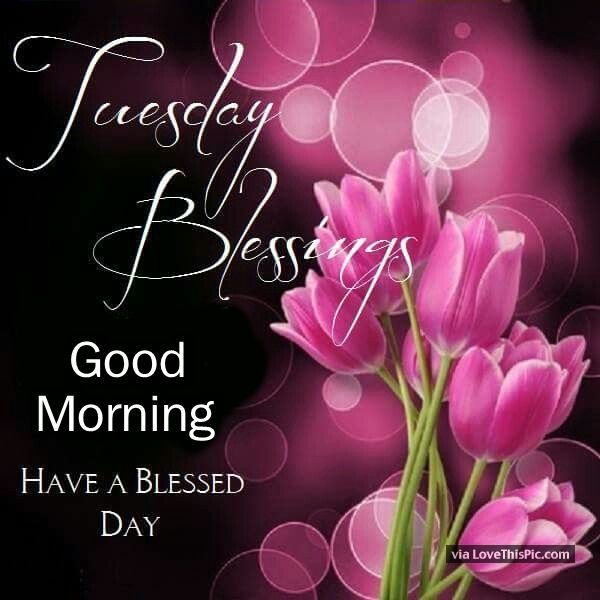 Tuesday Blessings Good Morning Have A Blessed Day | Happy tuesday quotes,  Good morning tuesday, Good morning flowers