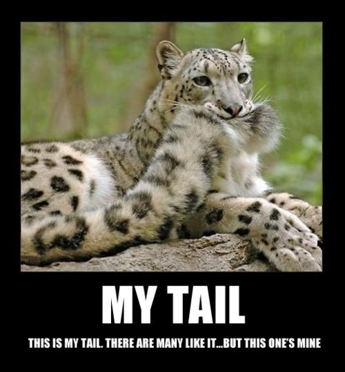 Silly Snow Leopard Is Silly Funny Animals Animals Beautiful