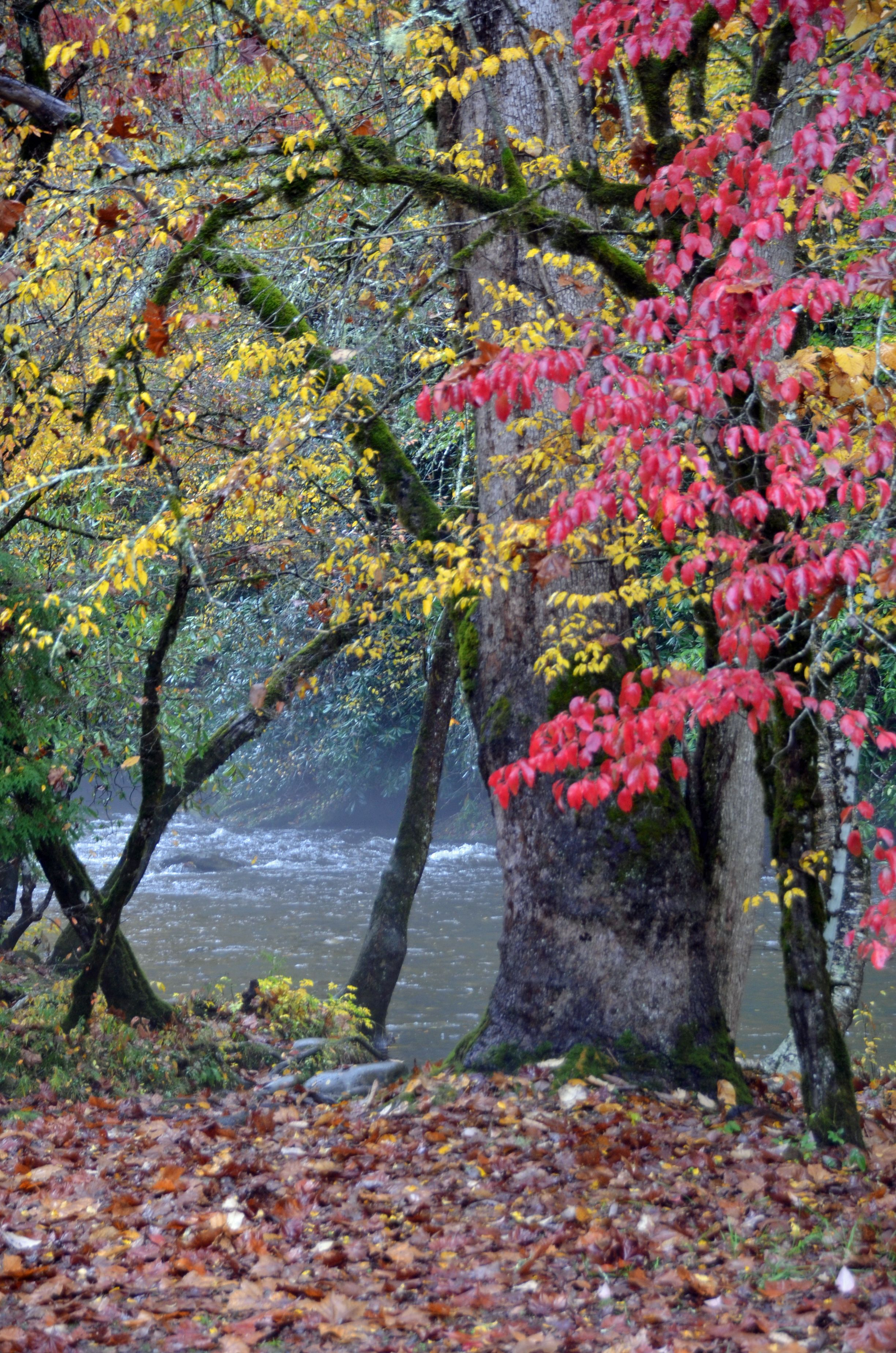 Deep Creek, Great Smoky Mountains National Park near Bryson City. A great fall hike!