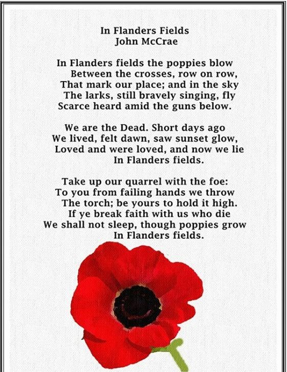 Poppy Flower Poem Garden Inspiration