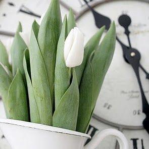 white tulips :)
