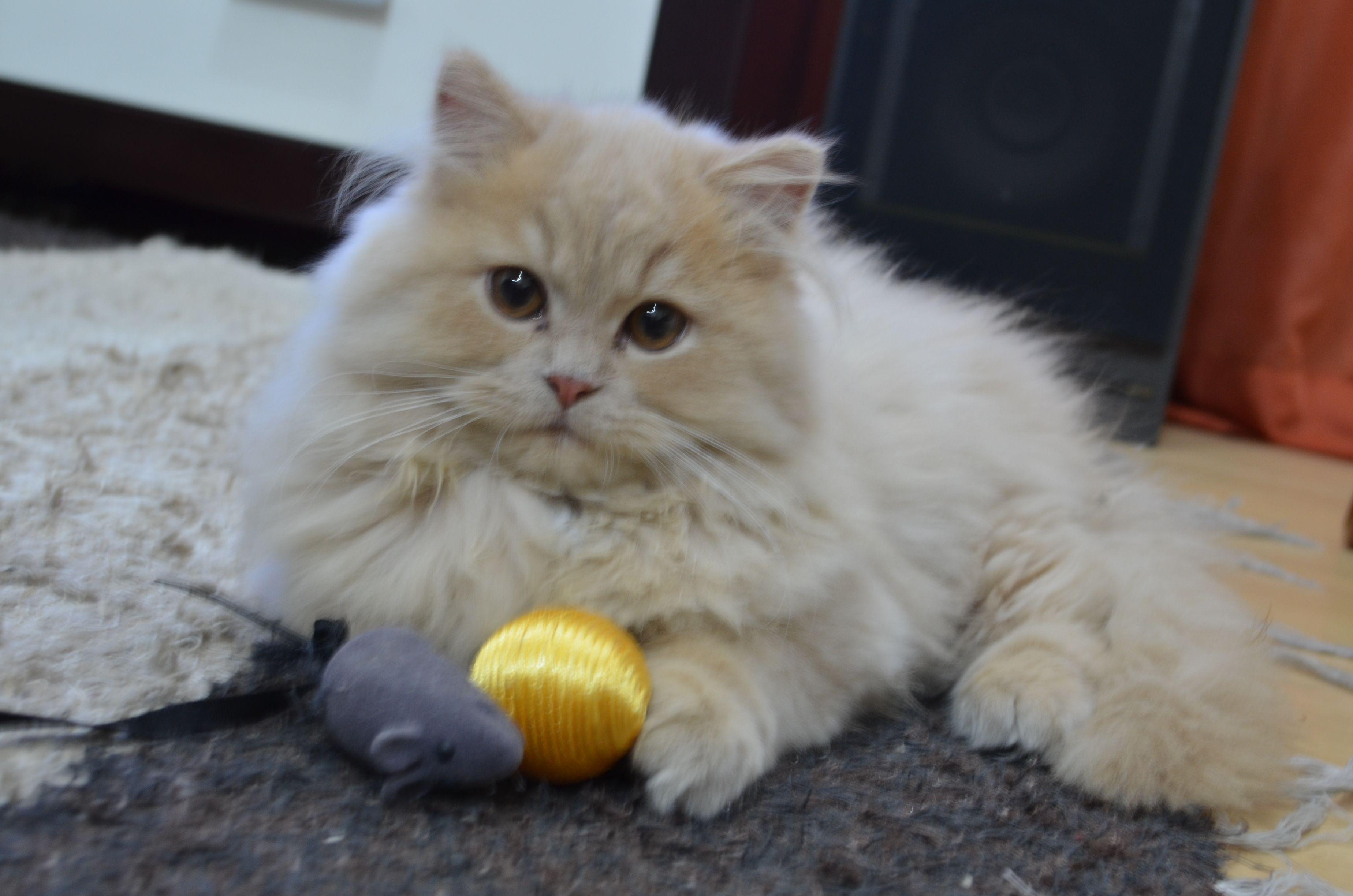 Baby Miau