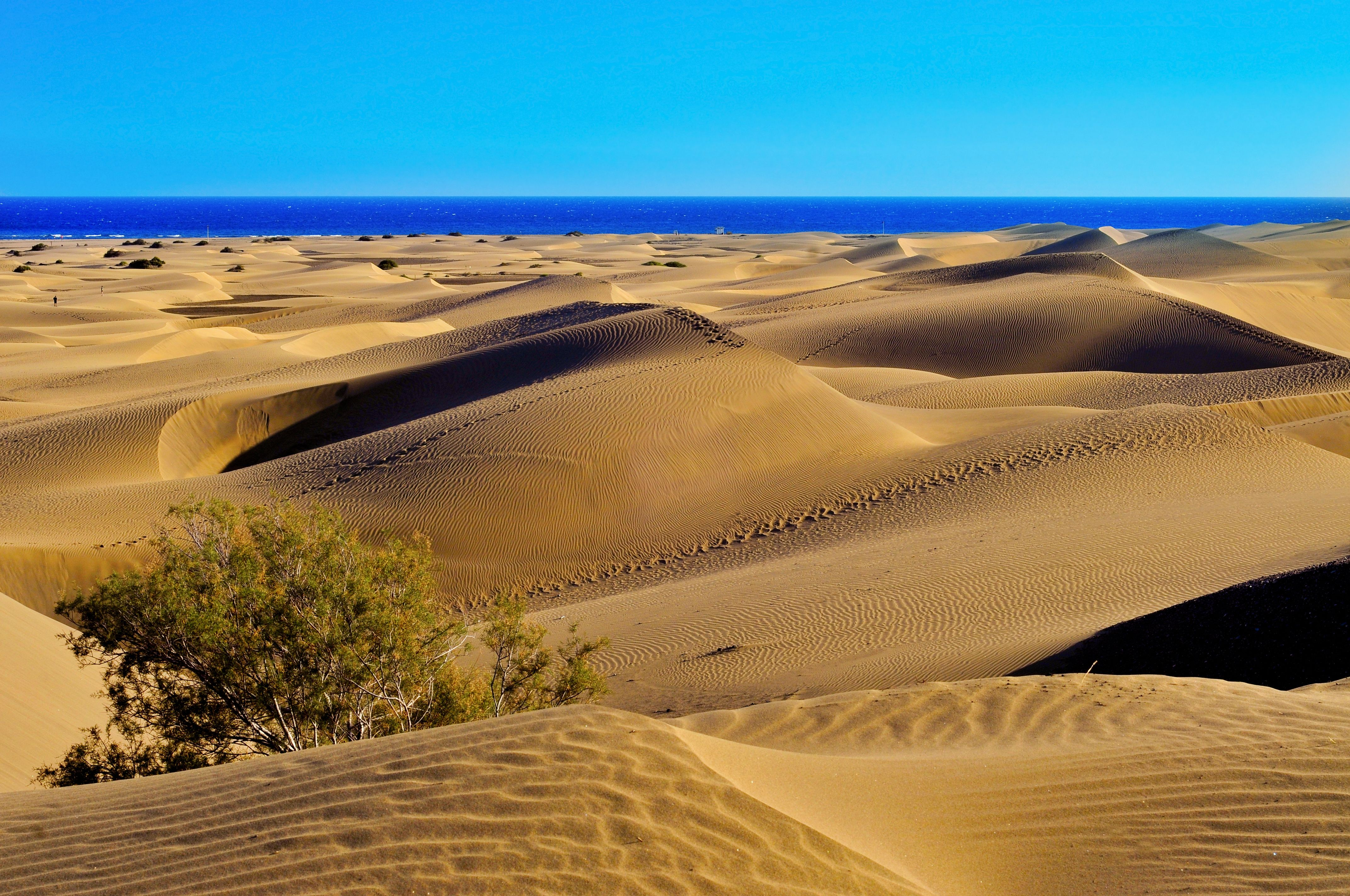 Natural reserve of dunes of Maspalomas, Gran Canaria #