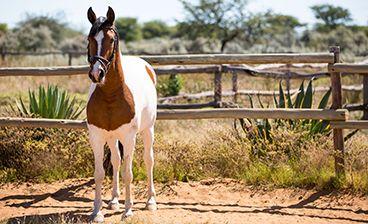 Riding & Horseback Safaris Kambaku  #Namibia #Horses #Horseriding #kambaku