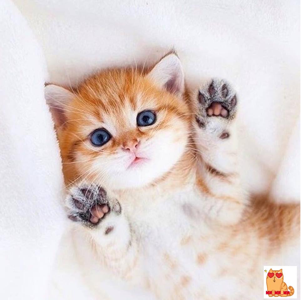 Самые «няшные» котики-милашки | Милые детеныши животных ...